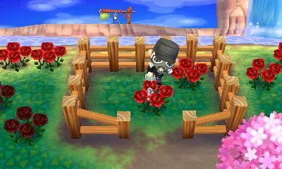 赤いバラに水やりをしよう