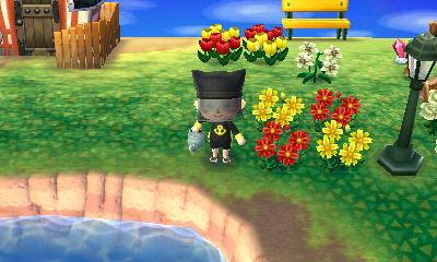 黒いコスモスを咲かせよう
