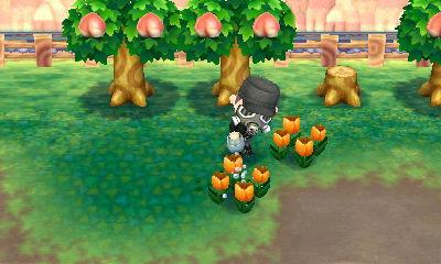 オレンジのチューリップも2本になりました。